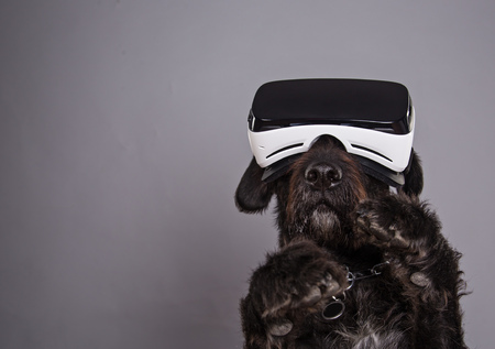 Black dog immersed in virtual reality