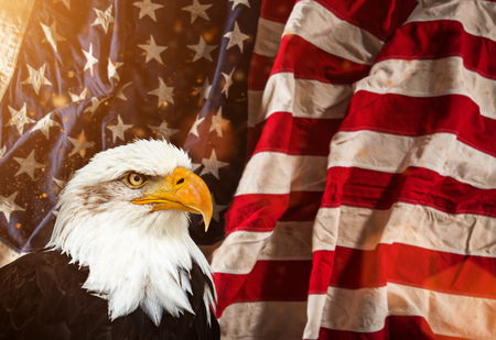 Bald Eagle with American flag. Stock Photo