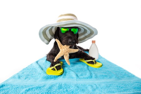 Mutt black dog with beach accessories. Funny summer concept.