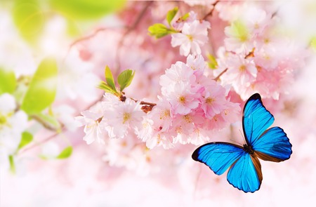 Spring blossoms with exotic butterfly. Free space for text.