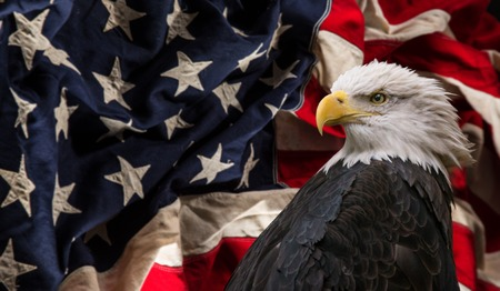 American Bald Eagle with Flag. Stok Fotoğraf - 103230727