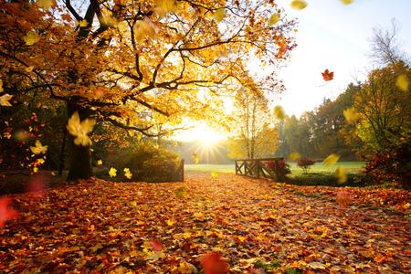 Bosque de otoño. Hermoso paisaje rural.