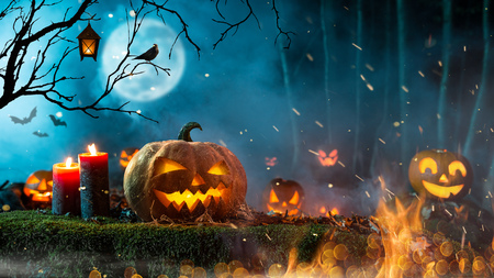 Halloween pumpkins on dark spooky forest. Stock Photo