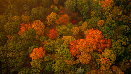 Aerial view of autumn foliage forest. 免版税图像