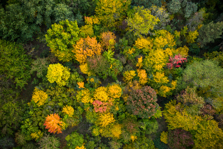Aerial view of autumn foliage forest. Stock Photo