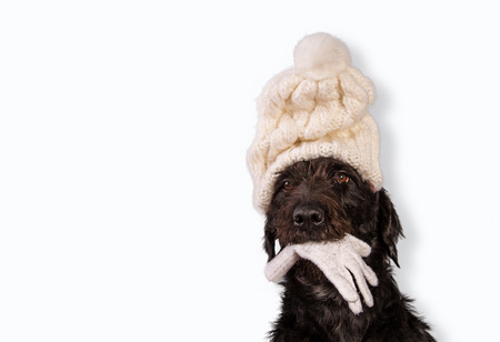 Black dog in winter outfit.