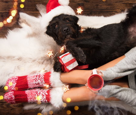 Girl in Christmas socks with her dog.