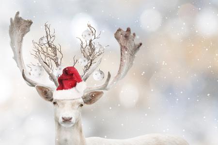 Portrait of Christmas santa white fallow deer. Stock Photo