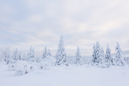 Beautiful winter mountains landscape, trees covered with snow.