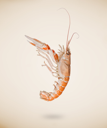 Back view of raw langoustine isolated on beige background.