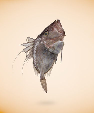 Zeus Faber (John Dory) fish, isolated on beige