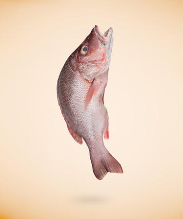 Fresh red sea fish on beige background. Stock Photo