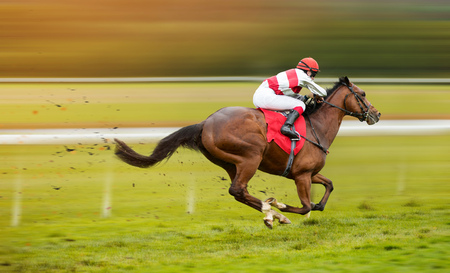 Race horse with jockey on the home straight Stockfoto