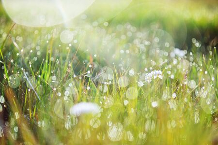 Close-up view of dew on the fresh green grass in the morning. Stok Fotoğraf