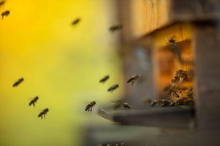 Nahaufnahme von fliegenden Bienen.