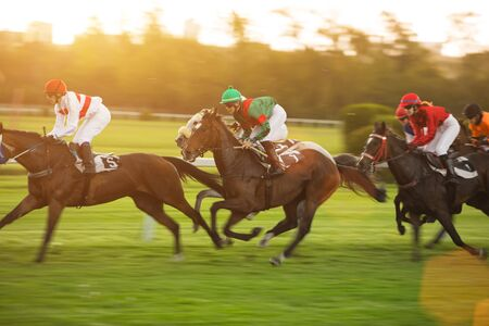 Race horses with jockeys on the home straight Reklamní fotografie - 127435997