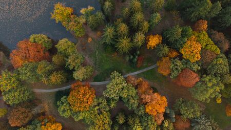 Aerial view of beautiful colored autumn forest. Stock Photo