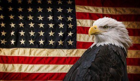 Águila calva americana con bandera. Foto de archivo