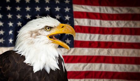 Aquila calva americana con bandiera.