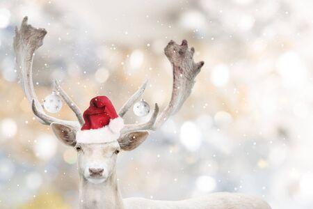 Portrait of Christmas santa white fallow deer in winter time. Stock Photo - 133561918