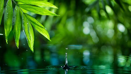 fresh green leaves with water drops over the water , relaxation with water ripple drops concept Standard-Bild - 145914149