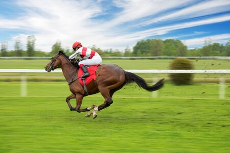 Race horse with jockeys on the home straight. Shaving effect. Standard-Bild - 145914030