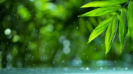 fresh green leaves with water drops over the water , relaxation with water ripple drops concept Standard-Bild - 145914327