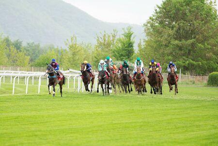 Race horses with jockeys on the home straight. Shaving effect. Standard-Bild