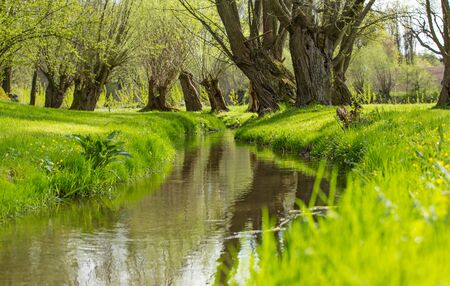 Beautiful natural spring scene with stream