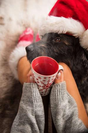 Girl in Christmas socks with her dog. Stok Fotoğraf