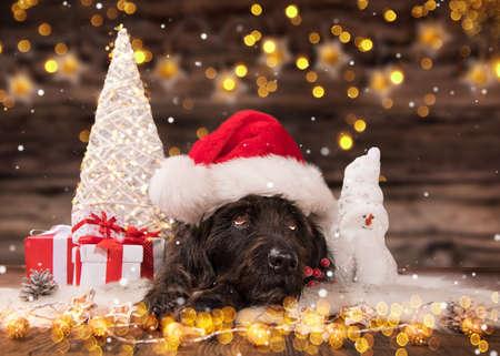 Black dog in santa cap Stok Fotoğraf