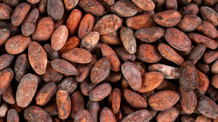 Raw cacao beans, top down view.