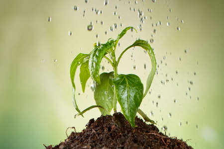 Concept of watering little seedling.