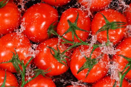 Falling fresh harvested tomatoes, water splash during impact Zdjęcie Seryjne