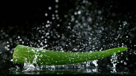 Falling Aloe Vera leaves, freeze motion, isolated on black background.