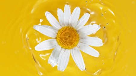 One white daisy flower on yellow water background Standard-Bild