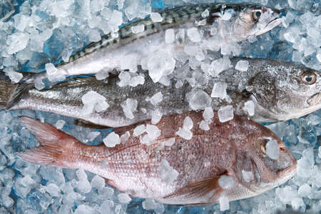 Close Up of Fresh Sea Fishes Lying on Crushed Ice.