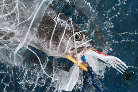 Falling sea fish with plastic garbage. Plastic waste environmental pollution problem.