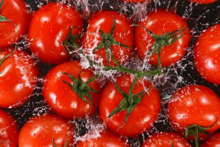 Falling fresh harvested tomatoes, water splash during impact Standard-Bild