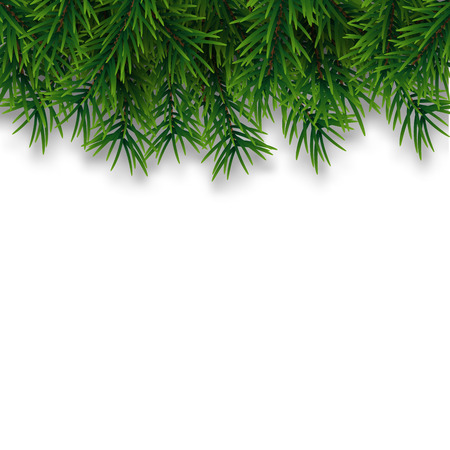 Christmas tree branches isolated on white background. Vector pine tree decoration template. Christmas frame illustration
