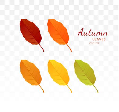 Set of bright realistic autumn leaves. Autumn design element. Vector illustration EPS10