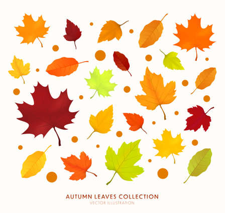 Autumn leaf isolated on transparent background. Botanical forest plants or september october tree foliage. Set of bright autumn leaves