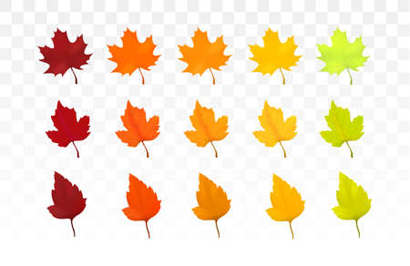 Autumn leaves set. Leaves with watercolor texture, vector illustration. Good for social media, promotional materials, ads, email marketing. Illustration
