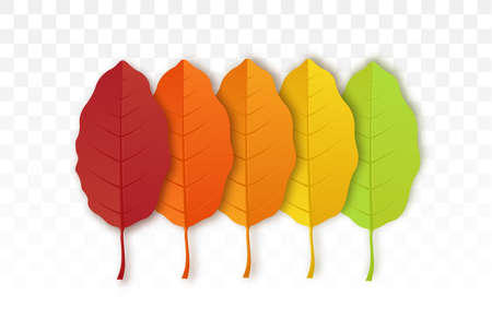 Autumn leaf isolated on transparent background.  Set of bright autumn leaves. Yellow autumnal garden leaf, red fall leaf and fallen dry leaves.