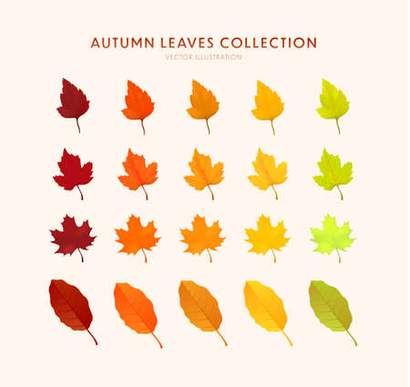 Set of bright realistic autumn leaves. Autumn design element. Cartoon leaf collection in flat style. Vector illustration EPS10