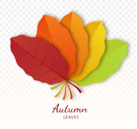 Autumn leaf poster isolated on transparent background. Botanical forest plants or september october tree foliage.