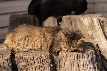 Homeless cat. Beautiful animals in the city park on a sunny day..