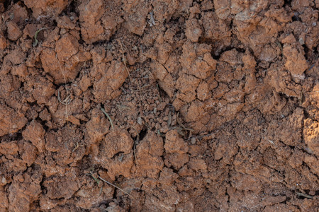 Cracked red clay soil in drought. A green leaf of grass makes its way through the lifeless soil