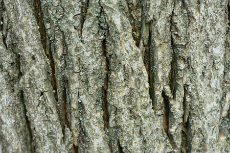 The bark of an old tree covered with moss. Creative vintage natural background
