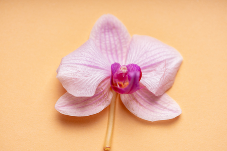 Delicate pale purple orchid flower on a colorful background